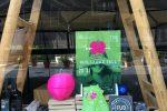 Le mele di Guglielmo Tell esposte nelle vetrine dei negozi a Palermo - Foto