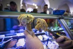 Fabbrica di gelato italiana Technogel apre in Mongolia