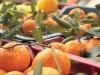 Stop al succo siciliano, il Distretto agrumi: