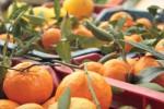 """""""People of Sicily"""", 42 tonnellate di agrumi dall'Isola alla Polonia"""