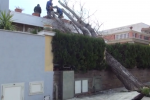 Albero cade su una casa, paura a Mondello - Video