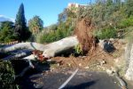Forte vento a Taormina, grosso albero cade in centro: paura ma nessun danno