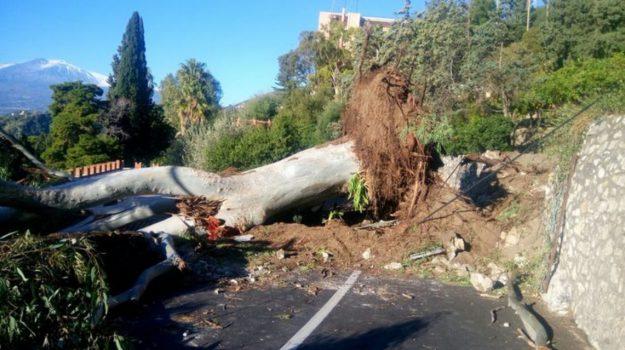 Maltempo Taormina albero, Messina, Cronaca