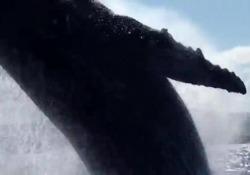 Australia, la balena salta a pochi cm dalla barca