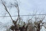 Xylella:Tap abbatte due ulivi infetti area cantiere gasdotto