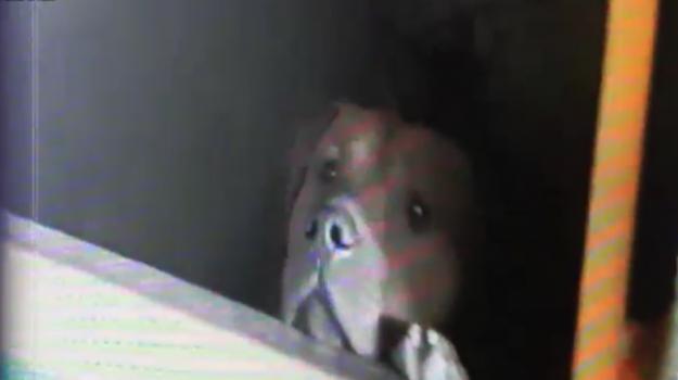 Catania, cane senza cibo e acqua per due giorni: denunciato il proprietario - Video