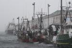 La pesca elettrica divide l'Ue