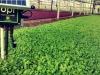 Colossi tedeschi agricoltura entrano in startup di Acerra