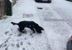 Il cane vede la neve per la prima volta e impazzisce di gioia