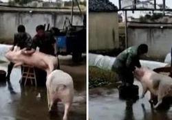 Un video, girato in Cina, e diventato virale