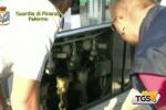 Mafia e carburante, blitz a Palermo con 9 arresti e sequestri