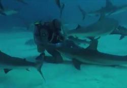 L'uomo che accarezza gli squali e riesce a ipnotizzarli