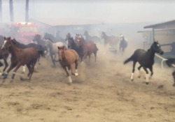 A San Diego, in California, ha preso fuoco un ranch con oltre 500 cavalli