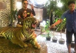 La tigre in posa per la foto con i turisti, il guardiano dello zoo la colpisce per farla ruggire: polemiche