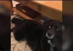 Lilly, il cane americano che canta con Adele