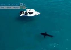 Lo squalo gigante appostato sotto alla barca vicino alla spiaggia