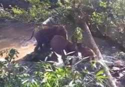 Mamma elefante ritrova il suo cucciolo che era rimasto intrappolato in una buca