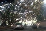 Piazza Santa Maria di Gesù