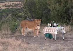 Picnic durante il safari, ma all'improvviso arrivano ospiti inattesi
