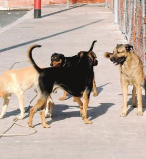Raffadali, strage di cani randagi: trovati avvelenati altri cinque animali
