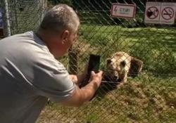 Gli animali maltrattati in circhi o negli zoo privati vengono riportati alla vita