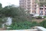 Forte vento a Palermo, chiusi tutti i giardini pubblici