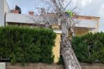 Vento e pioggia: alt collegamenti con Egadi e Eolie, albero su una casa a Palermo