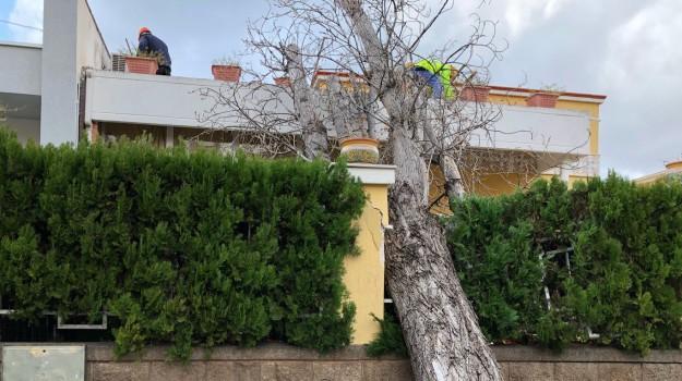 Maltempo Sicilia Palermo albero vento, Sicilia, Cronaca