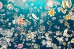 Il più grande atlante del Dna degli oceani
