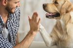 Un aiuto dai cani per i tumori, il 90% del patrimonio genetico è comune