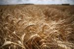 Il mercato assicurativo agricolo vale 7,2 miliardi