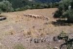 Salvi i pascoli tradizionali della Sardegna