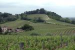 Vino: Piemonte, nel 2017 calo 19,8%, eccellenze a 6 doc