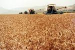Ue: export agroalimentare 2017, bene alcolici, crolla grano