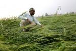 Appello Fao-Ocse, investimenti responsabili in agricoltura