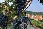 Città del vino,Italia enoica scompare in campagna elettorale