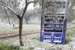 Maltempo: Coldiretti, in Puglia vitelli con il cappottino