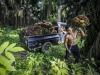 Parlamento Ue chiede divieto etichette senza olio di palma
