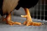 Ad ogni età una dieta, dopo i 65 ok pollo, verdure e cereali