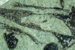 Le piante sono più antiche di 100 milioni di anni
