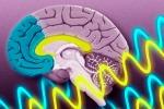 Il ritmo delle emozioni cambia nel cervello maschile e femminile