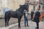 San Fratello, al via la valorizzazione del cavallo: firmata l'intesa