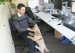 Al lavoro con il cane, il benefit che piace più dell'auto aziendale
