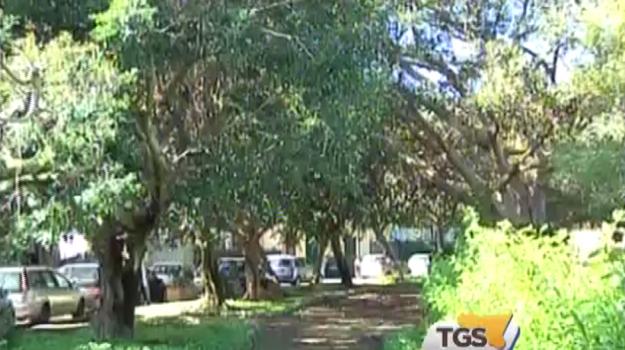 Mille nuovi alberi per le strade delle periferie di Palermo