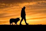 Fuori col cane o giardinaggio,attività allunga-vita anziani