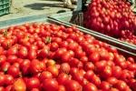 Martina, duplice azione contro crisi pomodoro