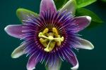 Riscritta l'origine dei fiori