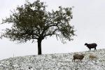 Coldiretti, danni da maltempo per 300 milioni nelle campagne italiane