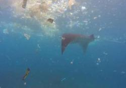 Ecco com'è ridotto il mare nel paradiso indonesiano dello snorkeling e delle immersioni