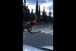 Fantino al galoppo su un viale dello Zen, lui e il cavallo si schiantano contro un palo - Video